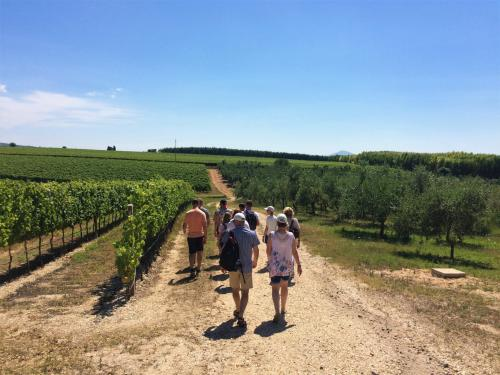 Hikers visit a vineyard in Alghero with a guide