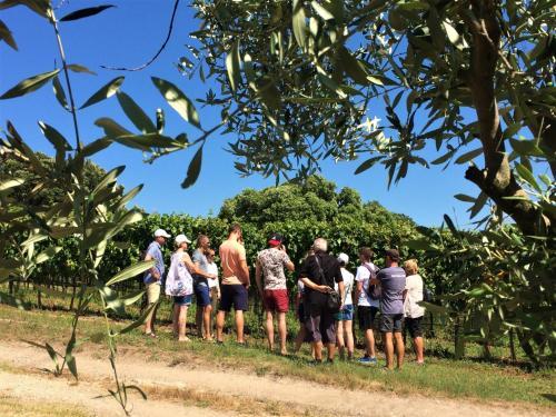 Hikers visiting a vineyard in the Alghero area