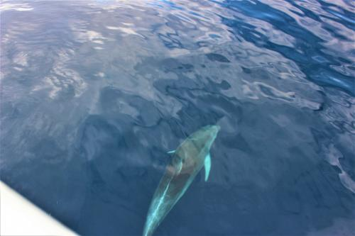 Dolphin spotted during a motor boat excursion in the La Maddalena Archipelago