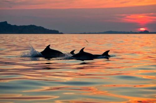 Delfini al tramonto  a Golfo Aranci