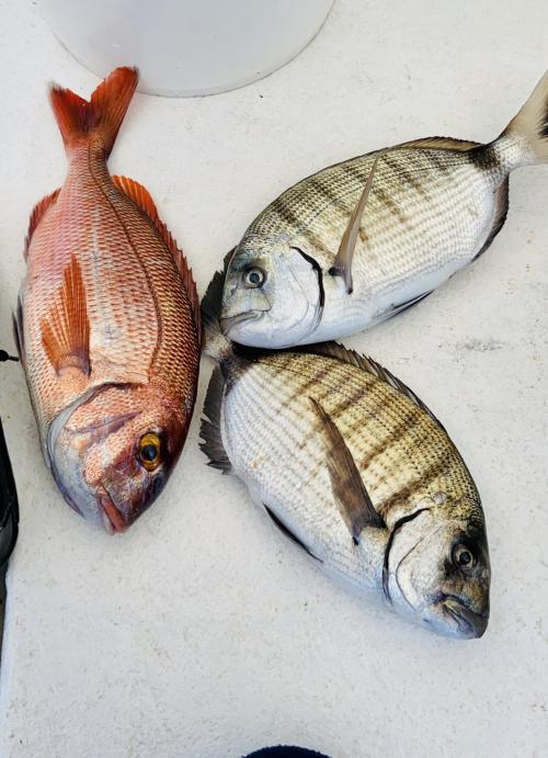 Pesci appena pescati nel Golfo dell'Asinara