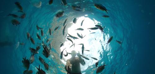 Snorkeling e pesci nei fondali del Golfo di Orosei