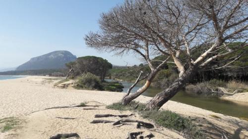 Naturaleza en la playa de Orosei