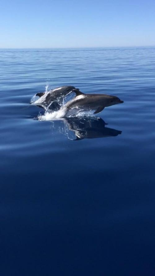 Dolphins in the coast of Alghero
