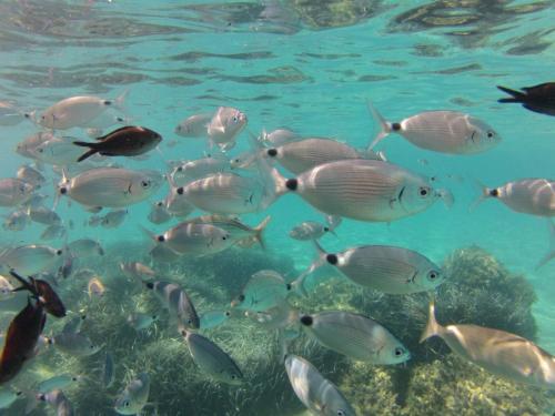 Fish in the Chia sea