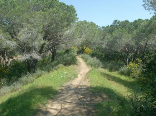 Natur und Wege