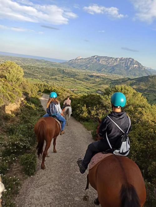 Horse hikers