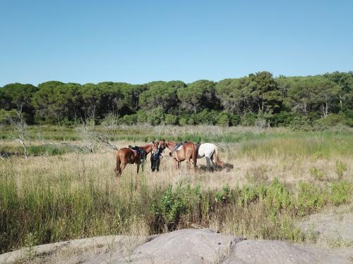 Pferde am Lago di Baratz