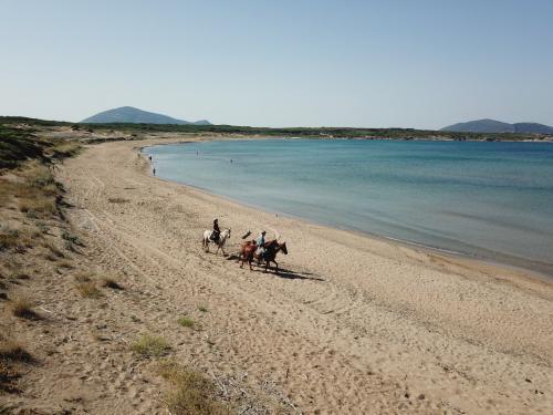 Horses and Porto Ferro beach