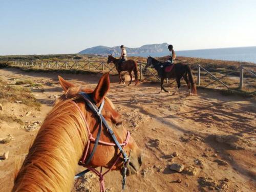 Pferde und Touristen