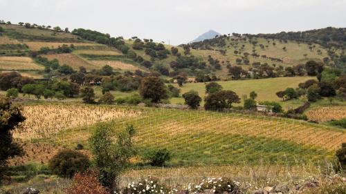 Weinberge in Mamoiada