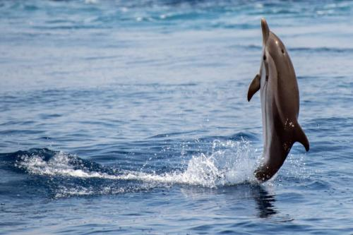 Dolphin jumps from the water