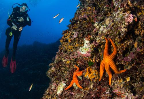 Hiker in the depths of Bosa with starfish
