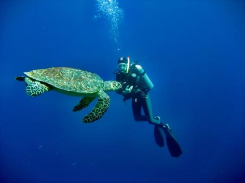 Hiker with sea turtle in Bosa