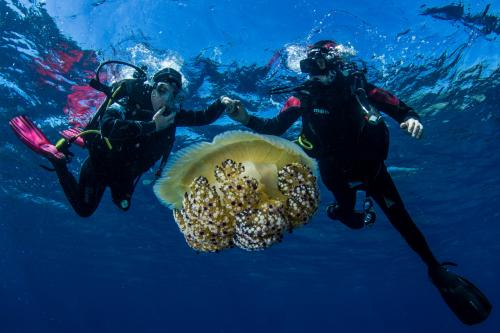 Hikers with giant jellyfish during sea baptism