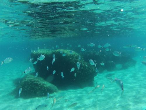 Fish in the sea of Villasimius