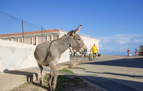 <p>Typischer Esel von Asinara</p><p><br></p>