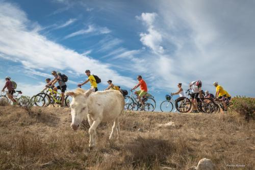 Weißer Esel und Wanderer mit dem Fahrrad in Asinara