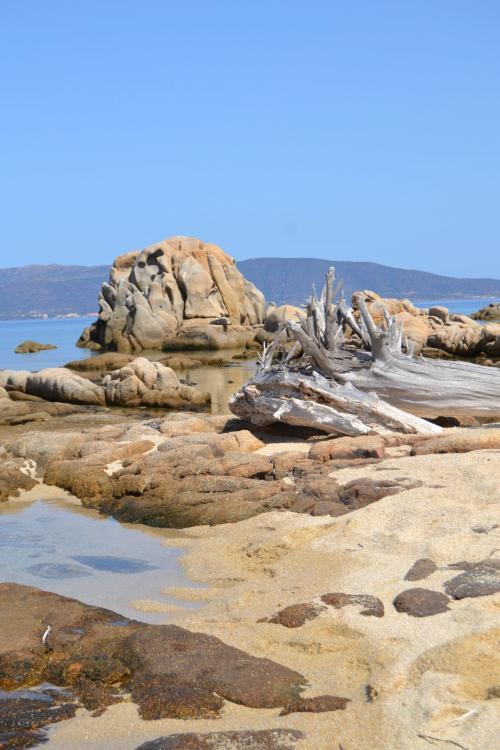 Felsen in Asinara