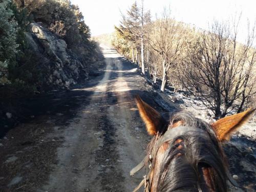 Trail for horseback riding in Irgoli