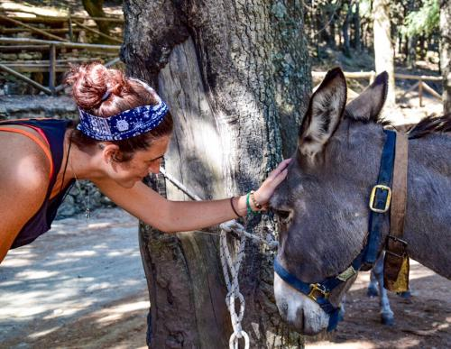 Girl and gray donkey