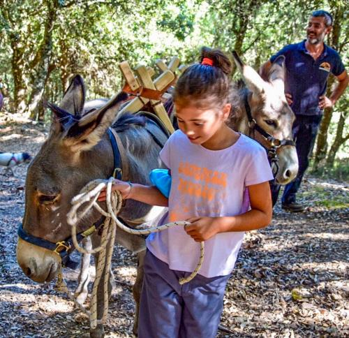 Little girl with donkey