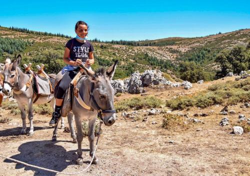 Child with donkey