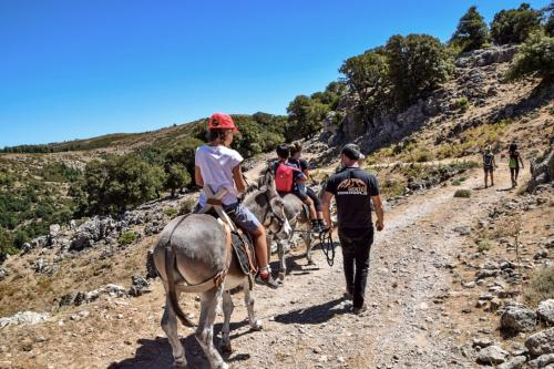 Guided walk with donkeys
