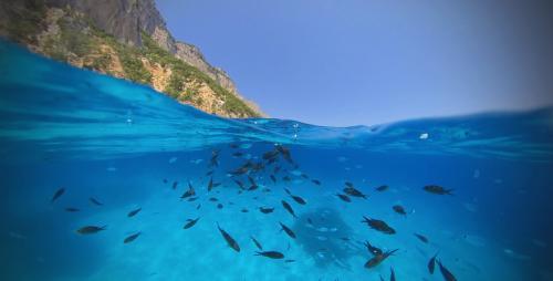 Fish in the sea of the Gulf of Orosei