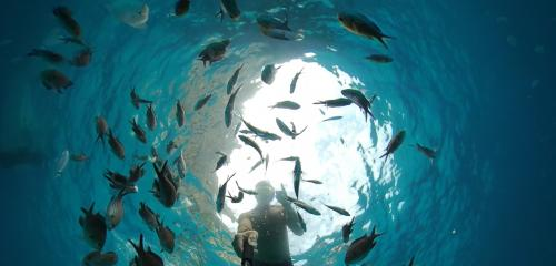 Boy snorkels among the fish