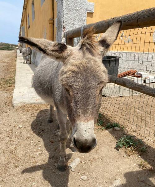 Asinello all'Asinara