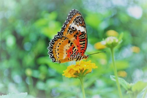 Mariposa en la casa de las mariposas