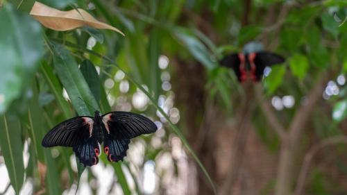 Primer plano mariposa