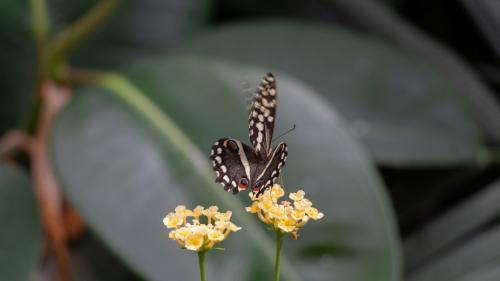Mariposa sobre flor amarilla