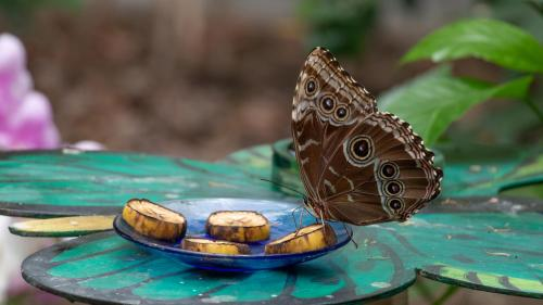 Mariposa que come