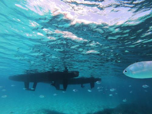 Catamaran and fish underwater