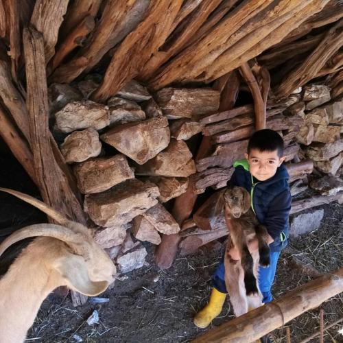 Kind im Schafstall mit Ziegen