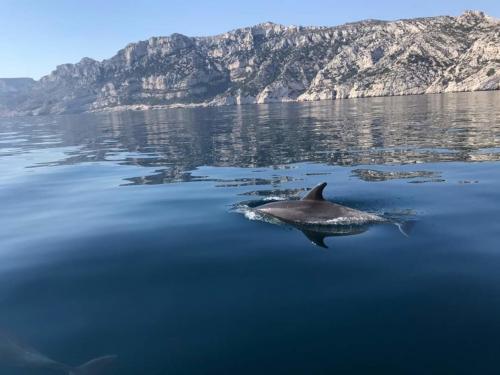 Delphin in den Gewässern der Sinis-Halbinsel