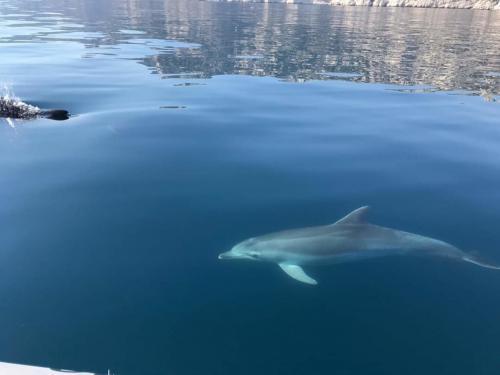 Delfinsichtung auf der Sinis-Halbinsel