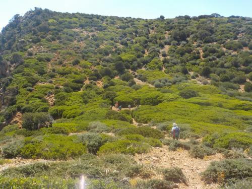 Green nature during trekking excursion