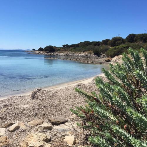 Beach on the island of Asinara