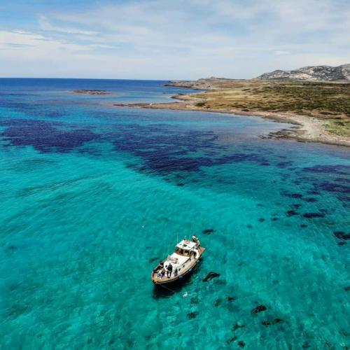 Wooden goiter in the Gulf of Asinara