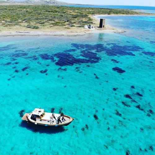Wooden goiter in the crystalline waters of Asinara