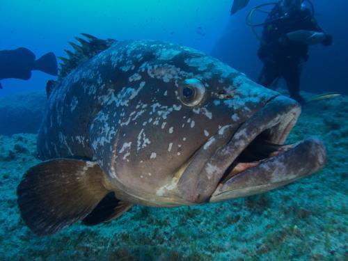 Fisch im Meer von Bosa