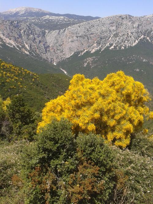 Natur in Gorropu