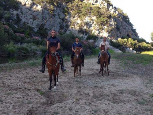 Horses on the Supramonte