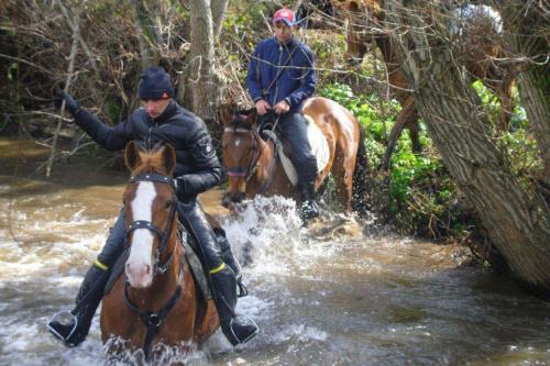 Horses cross the river