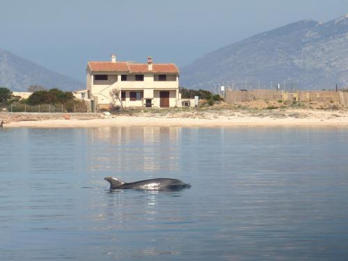 Dolphin in the coast of Olbia