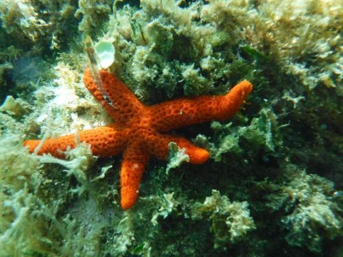 Starfish in the bay of Balai