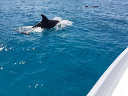Sichtung eines Delfins in Tavolara